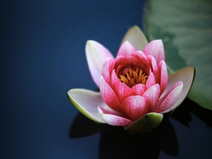 Everything You Need Know About Flowers Offered Hindu Deities