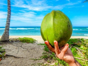 Tender Coconut Also Boosts Your Fertility