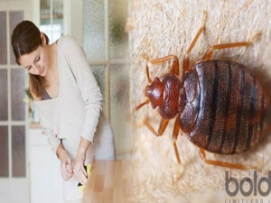 Ten Effective Home Remedies To Get Rid Of Bed Bugs