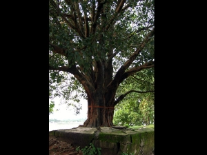 The Story Of A Mysterious Tree Planted By