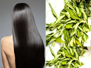 Curry Leaves For Hair Growth Ways To Use Curry Leaves