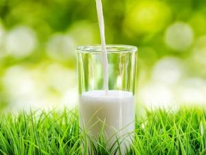 Health Benefits Of Goat Milk For Babies