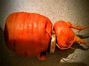 Man Finds Wedding Ring On A Carrot