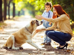 World Dog Day 2019 History And Significance