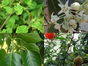 Which Plants Or Trees Are Considered Divine In India