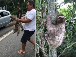 Viral Man Helped Sloth It Thanked Him