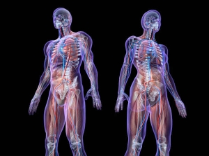 Biggest Unsolved Mysteries About The Human Body