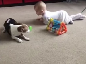 Dog Playing With Baby Viral Video