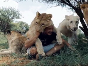 Lions Hugging And Kissing Man Video Goes Viral