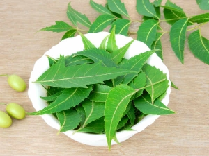Be Aware About Side Effects Of Neem