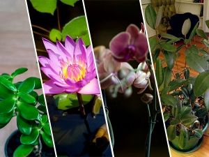 Plants That Will Change The Luck Of Your Home