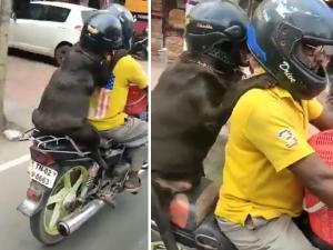 Dog Wearing Helmet Going In Bike Video Goes Viral
