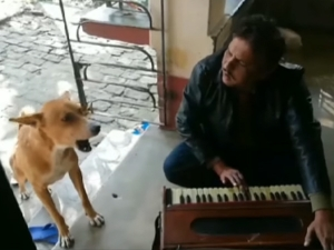 Talented Dog Joining His Owner To Sing Teri Meri Song