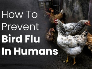 Tips On How To Prevent Bird Flu In Humans