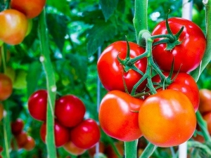 World Environment Day 2020 Terrace Garden Tips