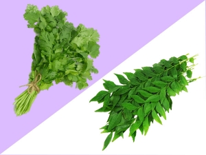 How To Store Coriander And Curry Leaves