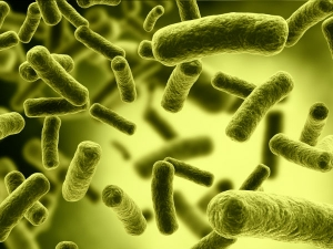 Shigella Infection And Its Causes Symptoms