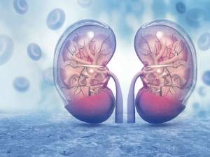 Kidney Cancer Causes Stages Symptoms And Risk Factors In Kannada