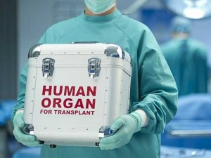 What Is Organ Donation What Organs And When Can Brain Dead Person Can Donate Organ