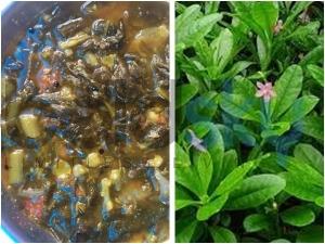 Nela Basale Or Talinum Fruticosum Curry Recipe In Kannada