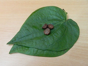 Beauty Benefits Of Betel Leaves For Skin And Hair In Kannada