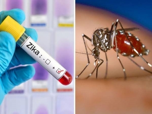 Zika Virus Symptoms Treatment And How To Prevent In Kannada
