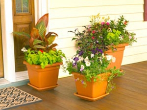 Plants To Never Keep In Your House Or Workplace